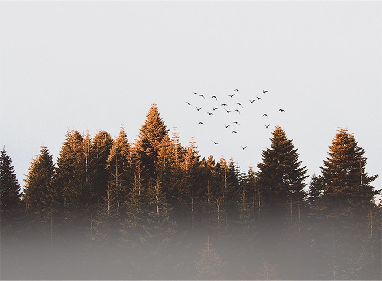 Borging - Vogels - Synchroon Circulair
