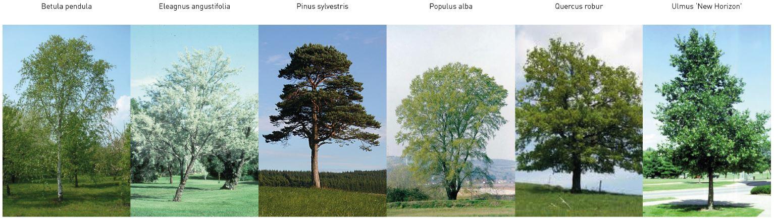 Synchroon-Circulair-De-mens-is-te-gast-in-het-landschap-Boomsoorten