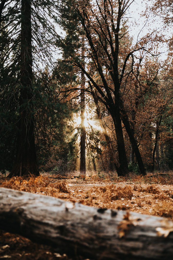 Synchroon Circulair- Hout-snel, efficiënt en duurzaam-bos